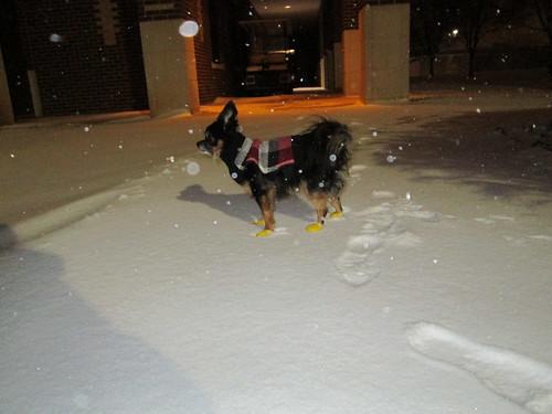 Itzl in Snow