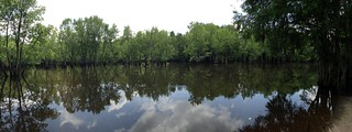 Sparkleberry Swamp Landing Panorama