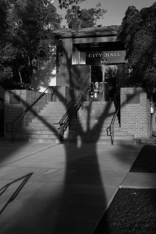 tree shadows 3