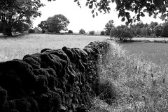 20130806-44_Drystone wall - near Alstonefield