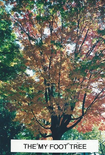 Delaware Tree