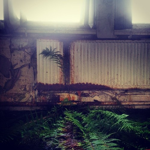 #UrbanJungle #fern