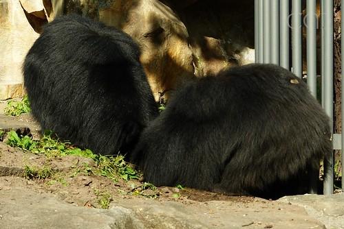 Busy busy bears! :)