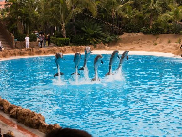 LoroParque-Delphinshow2