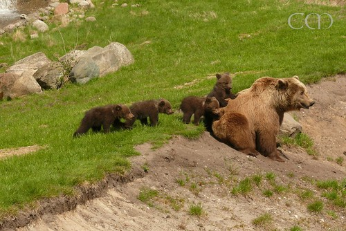 What a bunch of cute cubs!