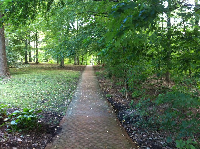 Wooded path on IUB campus.