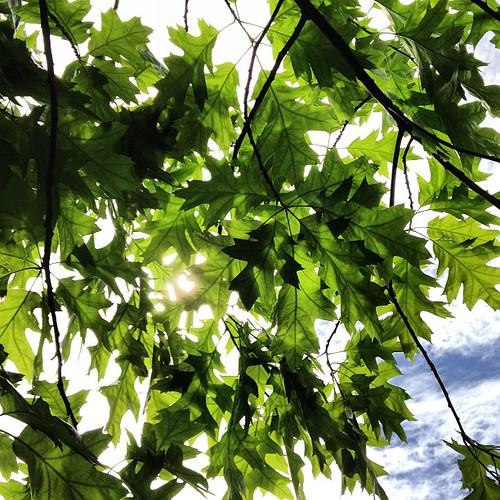Underneath a tree...