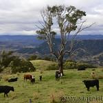 02 Viajefilos en Australia. Barrington NP 45