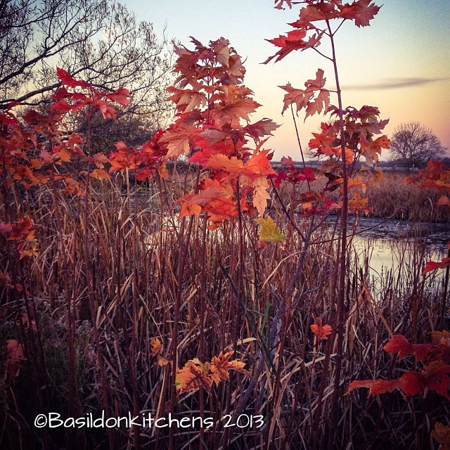 Oct 25 - autumn/spring {it's autumn on this side of the globe; this is a marsh I drive past each morning.}. #photoaday #autumn #fall #marsh #titlefx