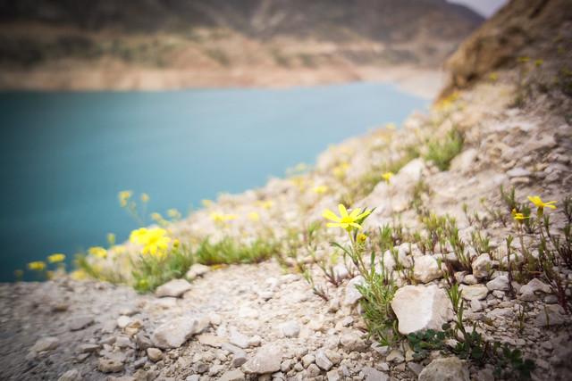 Spring flowers by Karun 3 lake