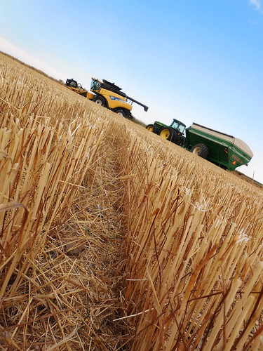 Stubble view of combine and grain cart
