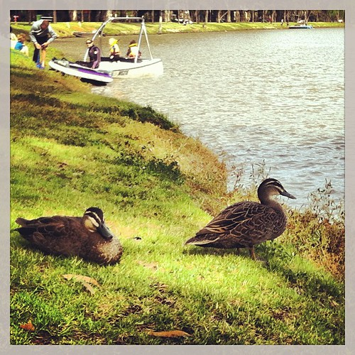 Ducks and boats by the river during a morning walk with the kids.