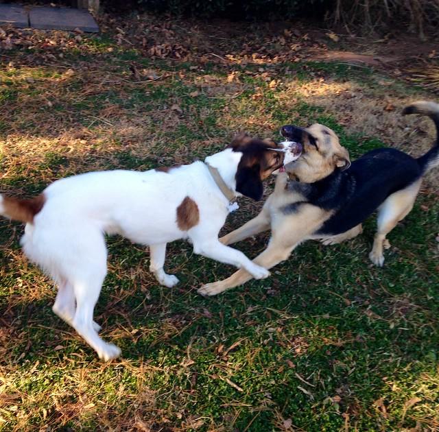 Last Locust puppy play date