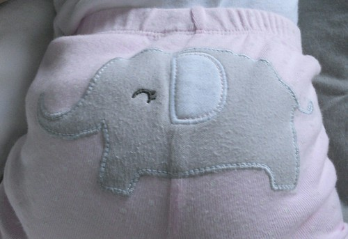 cute elephant in pants