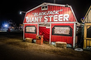 Giant Steer