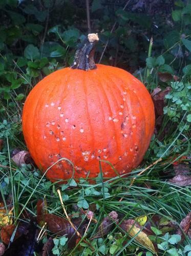 Pumpkin 5 Day 4