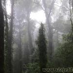 07 Viajefilos en Australia. Dorrigo Rainforest NP 14
