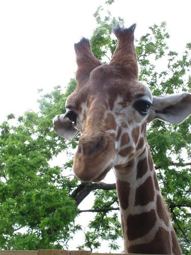 Elmwood Park Zoo (3/6)