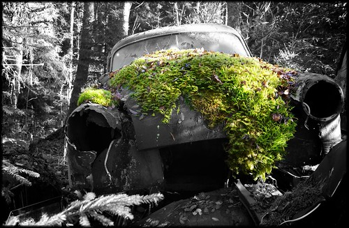 Moss grows fat on a… by Davidap2009