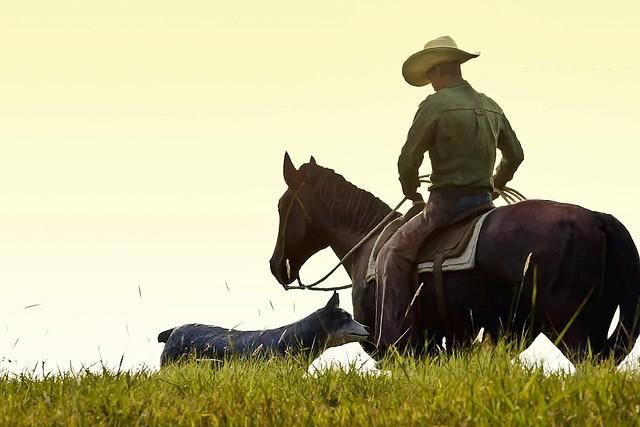 Cowboy, Horse, And Dog