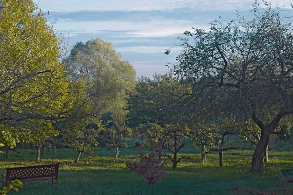 Mon jardin l'automne