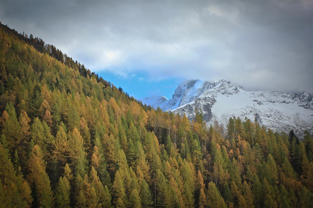 European larch turns the Alps into painter's dreams. Vallée de Chamonix. Haute-Savoie. France.
