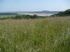 Brown Robin reserve