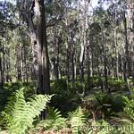 02 Viajefilos en Australia. Barrington NP 38