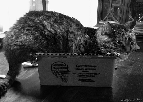 B&W Sunday Oct 6: Roma in a box