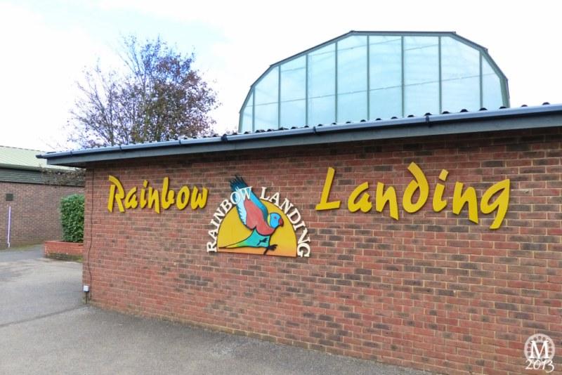Rainbow Landing - Lorikeets