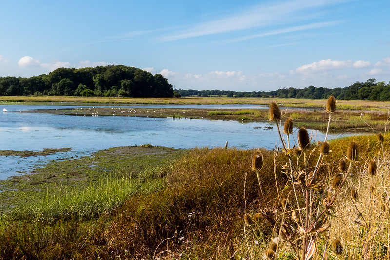 View towards Pergin's Island and Upton Country Park