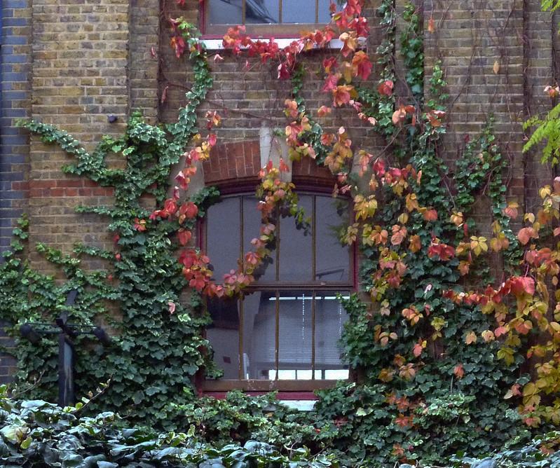 farringdon-window-ivy