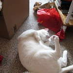 Christmas Wrapping and the Cat