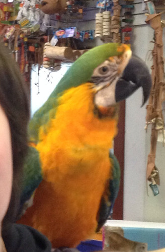 Catalina Macaw.