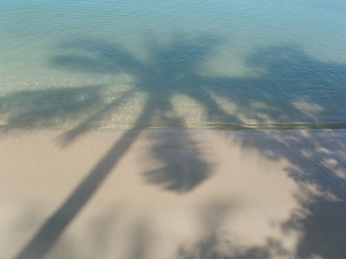 201401290096-coconut-palm-tree-shadows