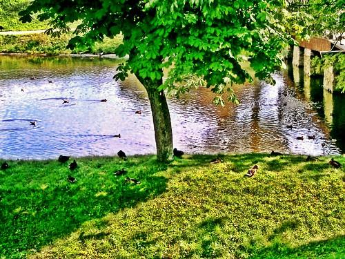 Fredrikstadt ducks by SpatzMe