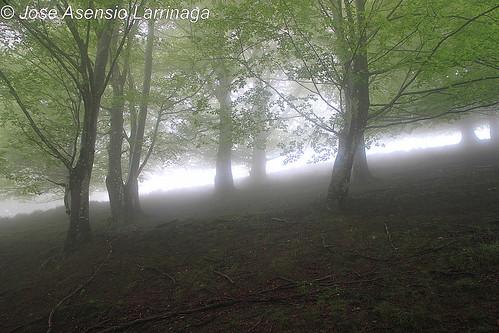 En la niebla #DePaseoConLarri #Photography  16