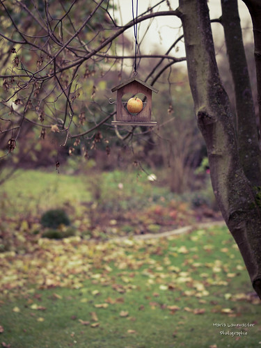 Novembergarten