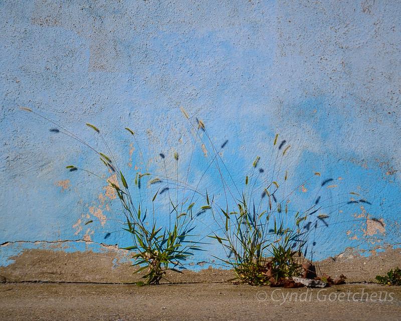 weeds on blue