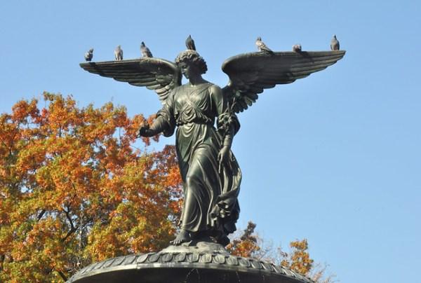 angelbirds