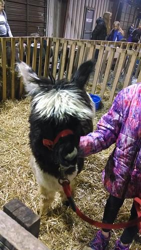 World of Pets Expo, January 25, 2014