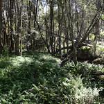 06 Viajefilos en Australia. Cathedral Rock NP 16