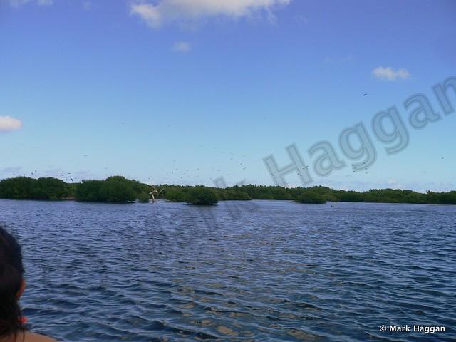 The Frigate Bird Sanctuary on Barbuda