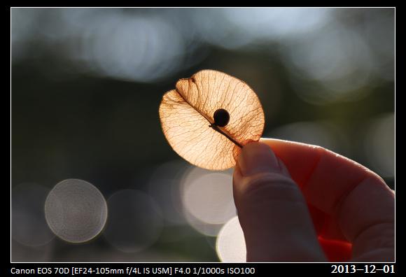 20131201_Seed