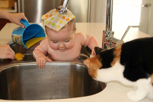 Harper bathing in the sink