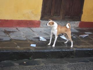 rando Dog