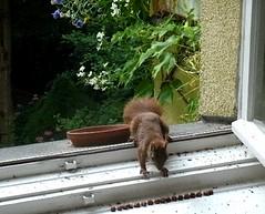 Eichhörnchen 3.4