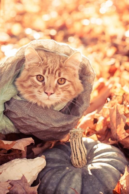 Rosebud in a scarf