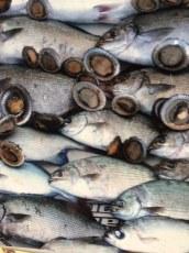 Opihi & fish