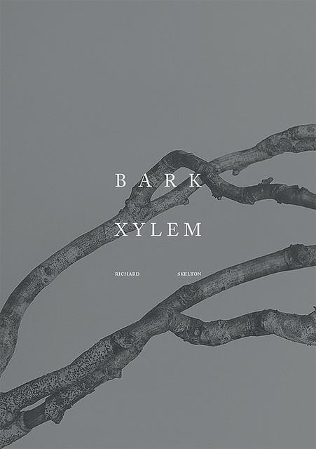 Bark, Xylem